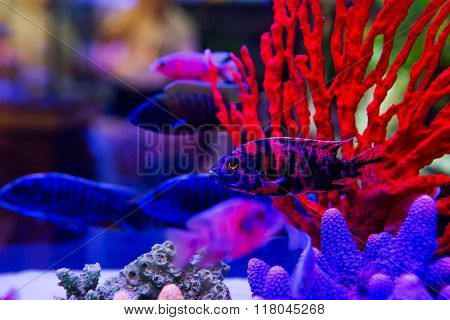 Colorful fish in aquarium saltwater world for background