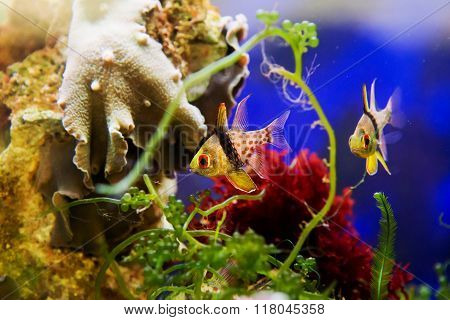 fish swimming under water near coral and water plants