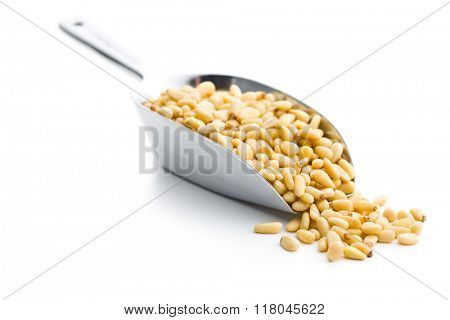 pine nuts in scoop on white background