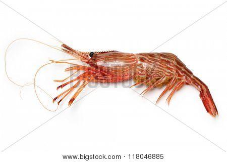 morotoge shrimp, shima ebi, japanese seafood isolated on white background