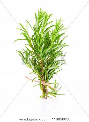 Tied Fresh Rosemary
