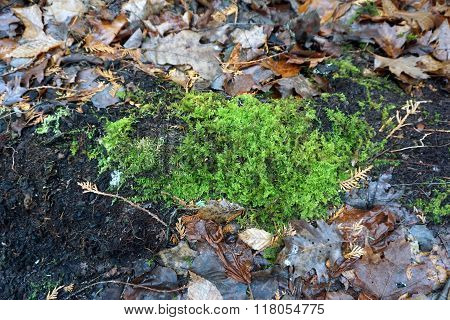 Moss on a Decomposed Log