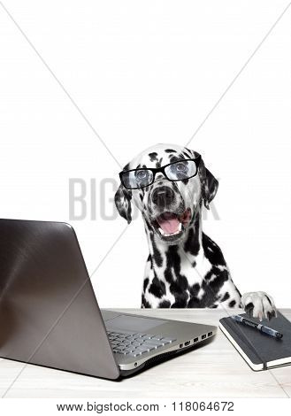 Dalmatian With Laptop And Notebook.