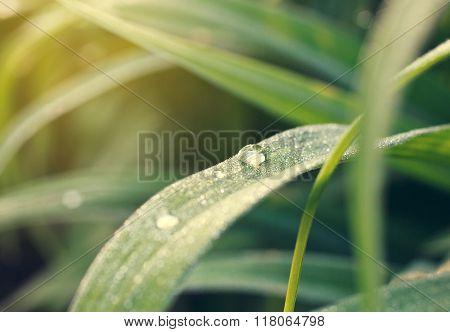 summer morning dewdrop