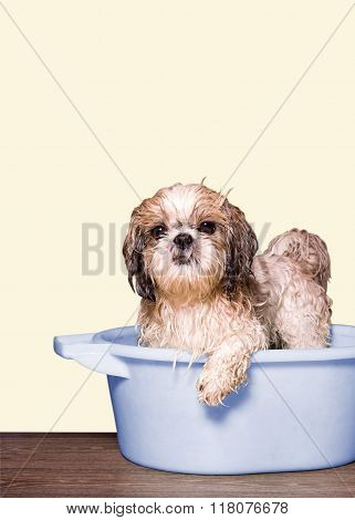 Dog Wash In A Basin
