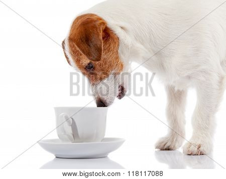 Doggie Of Breed A Jack Russell Terrier And White Cup.