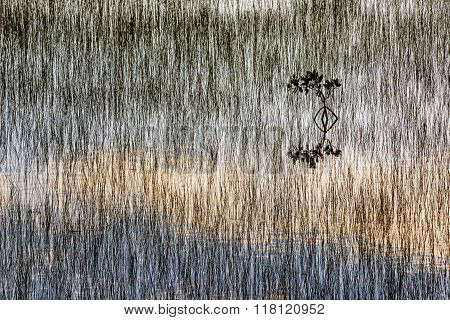 Grass And Mangrove