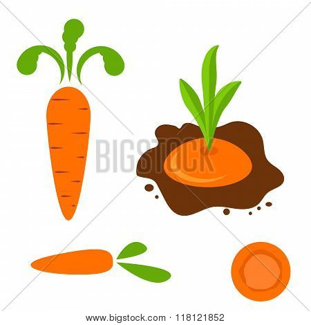 Carrot Vector Set In Different Styles.