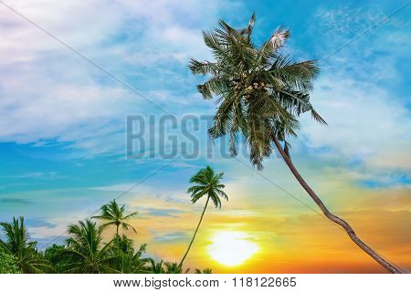 Beautiful Sunrise And Tropical Palms