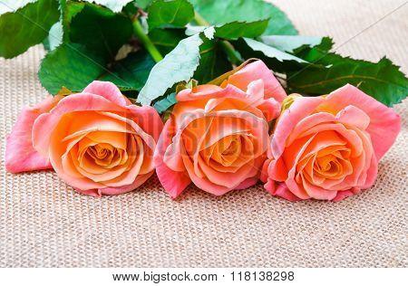 Three red-orange rose on the sacking
