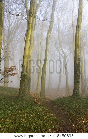 English Beach Woodland On A Misty Morning