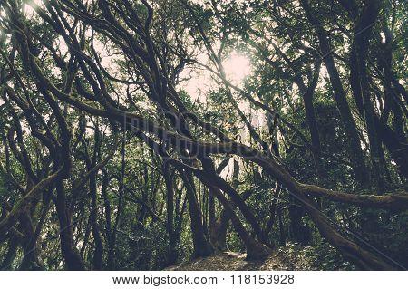 Laurel Forest In Anaga National Park