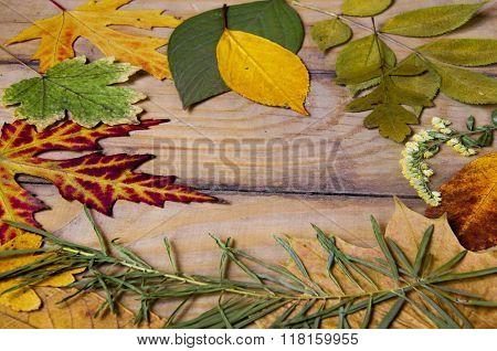 Herbarium Of Dried Plants Background