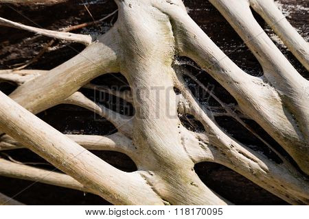 Freakish roots of a tree outdoors, sea coast.
