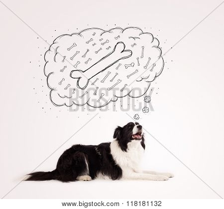 Cute black and white border collie lying and dreaming about a bone in a thought bubble