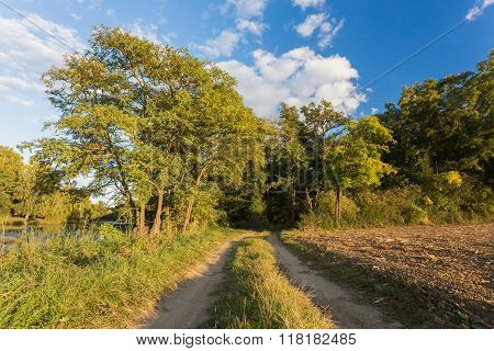 Rural Lanscape, Dirt Path Leading Into The Forest