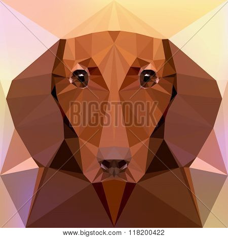Face of a dachshund dog