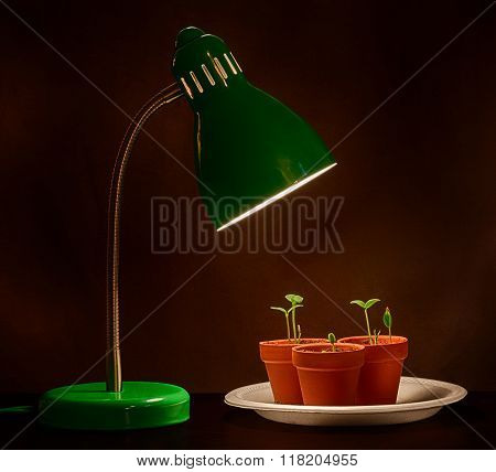 Three Sprouts With Grow Lamp