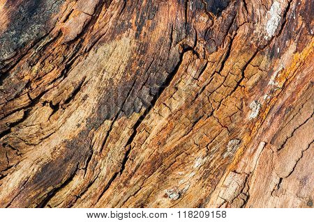 old cracked dead tree wood texture background