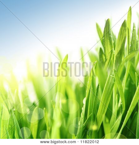 Fresh Spring Summer Grass In Sunshine Under Blue Sky
