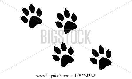 Imprint of the black paws prints of the animal.