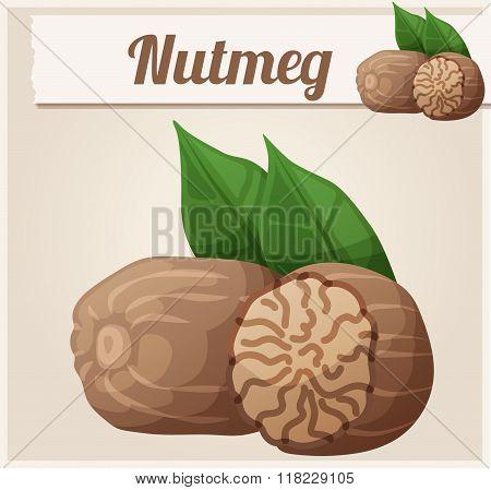 Nutmeg. Detailed Vector Icon