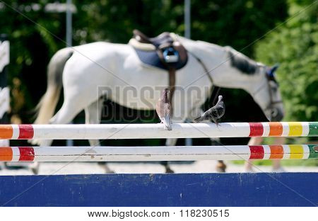 Dove On Hurdle At A Horse Race Track