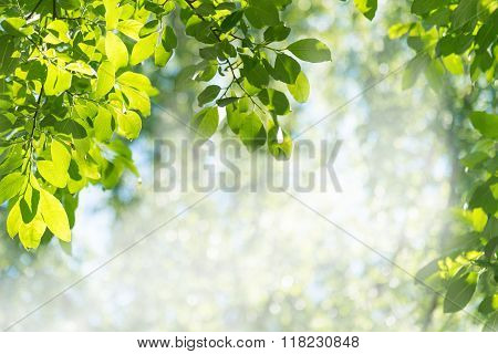 Green Leaves Against The Forest