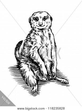 engrave ink draw meerkat illustration