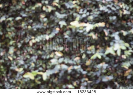 Green Plant Wall Blurred Background