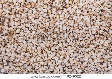 Seed Coix lacryma-jobi for background and texture