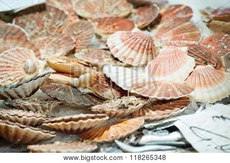 Scallops At The Fish Market