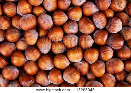 Stack Of Hazelnuts. Hazelnut Background
