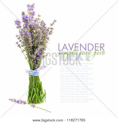 Lavender Flowers (lavandula) Isolated On White Background