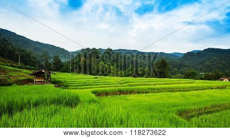 Beautyful paddy field in the countryside at Thailand