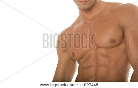 Muscular male body builder