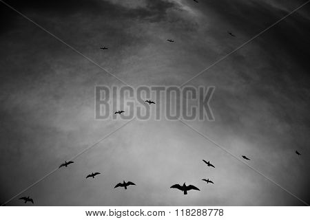 Silhouette of birds flying through a surreal gray sky