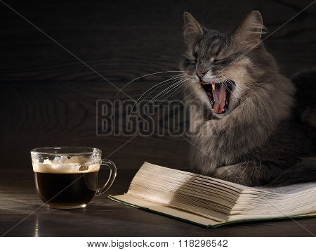 The cat yawns. Coffee and book