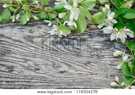 Frame Of Spring Flowers On A Wooden Background.