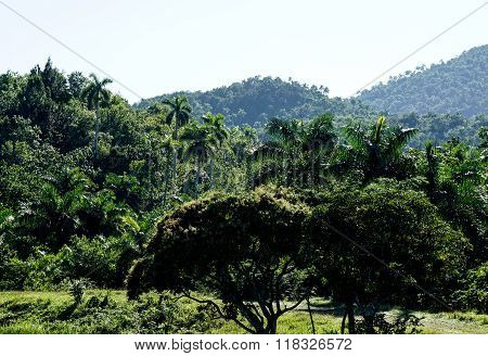 Tropical Forrest With Palms