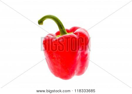 Organic Big Red Ripe Fresh Bell Pepper Capsicum Isolated On White Background.