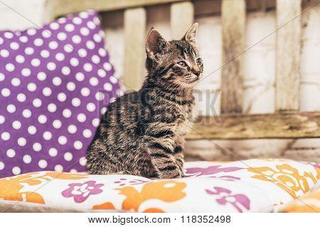 Adorable Baby Grey Tabby Kitten On A Garden Bench
