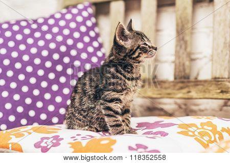 Little Kitten Enjoying A Warm Spring Day