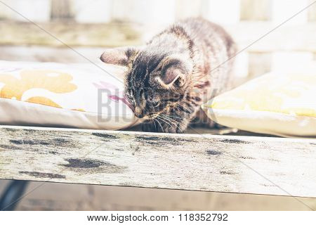 Young Kitten On A Wooden Garden Bench