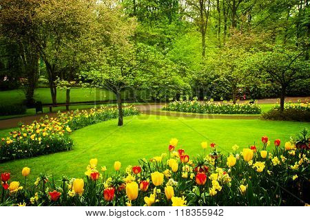 spring blooming garden