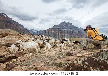 Animal Nature photographer in Himalayas mountains. Spiti valley, Himachal Pradesh, India