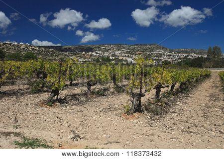 Beautiful Vineyard Against Mountains. Cyprus