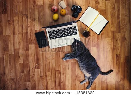 Work Space: Man Working On The Floor With His Grey Cat.