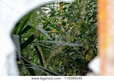 View into overgrown greenhouse through broken window