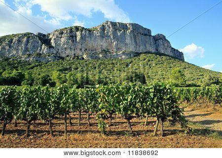 Hortus mountain seen from vineyard
